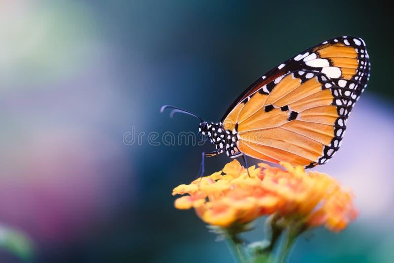 Farfalla arancio sul fiore fotografie stock