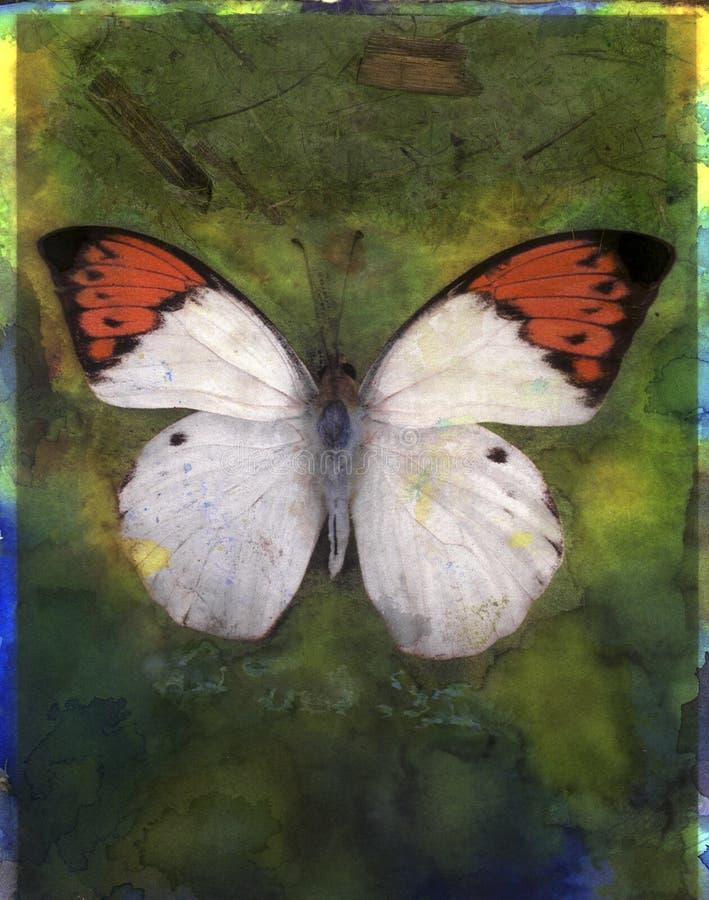 Farfalla arancione di punta illustrazione di stock