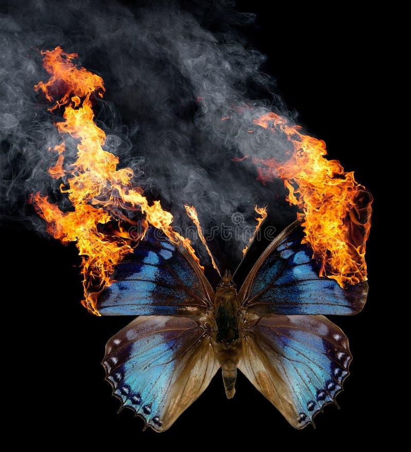 Farfalla Burning fotografia stock