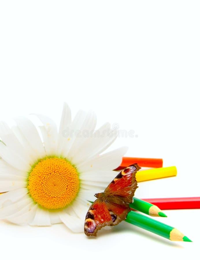Farfalla, camomilla e matite di colore immagine stock libera da diritti