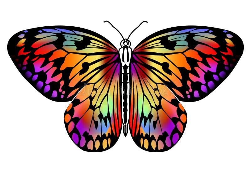 Farfalla che assorbe i colori vivi nel profilo nero, farfalla tropicale isolata su fondo bianco, stilizzato decorativo royalty illustrazione gratis