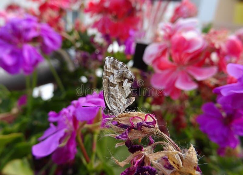 Farfalla che riposa in una pianta immagini stock