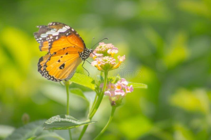 Farfalla che si appollaia sul fiore fotografie stock