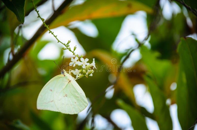 Farfalla che si siede sul fiore in natura immagini stock