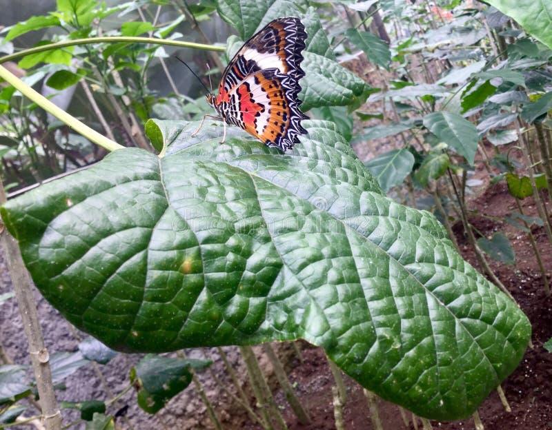 Farfalla colorful immagini stock libere da diritti