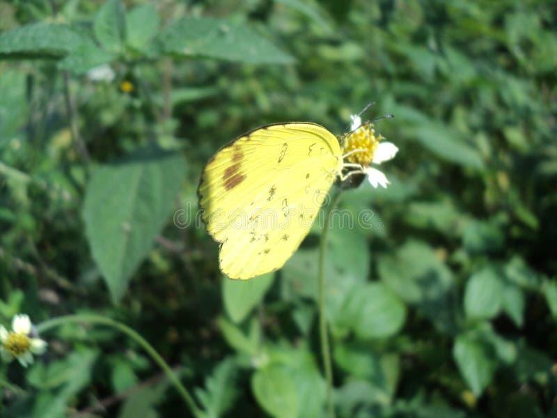 Farfalla con i bei colori fotografia stock libera da diritti