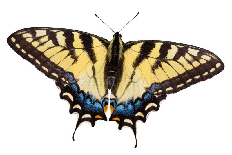 Farfalla con il percorso di residuo della potatura meccanica fotografia stock libera da diritti