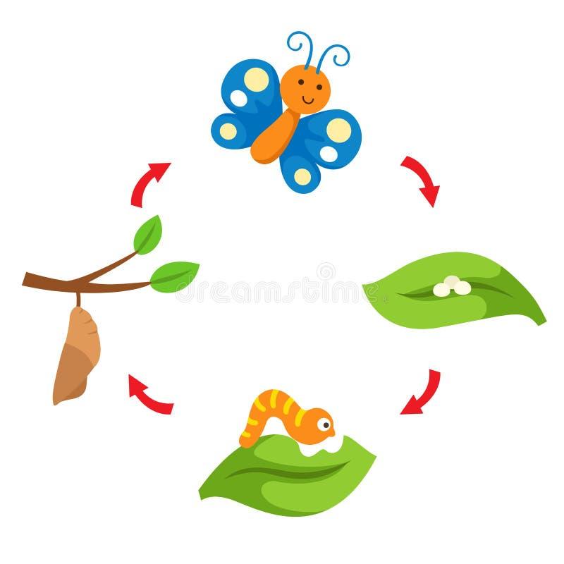 Farfalla del ciclo di vita dell'illustrazione illustrazione di stock