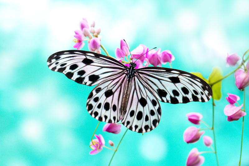 Farfalla del documento di riso fotografie stock libere da diritti