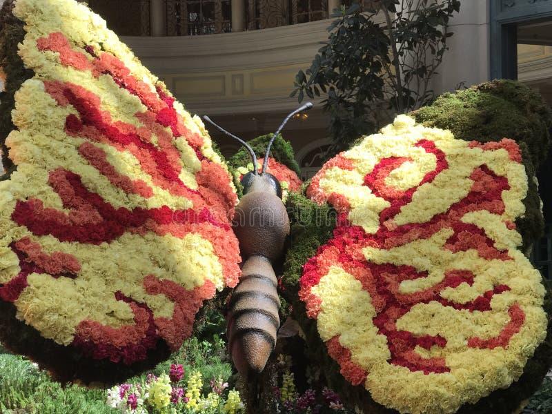 Farfalla del fiore immagini stock