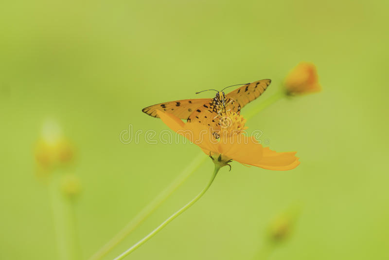 Farfalla del primo piano sul fiore immagini stock libere da diritti