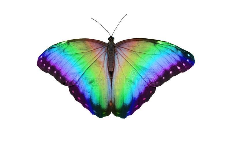 Farfalla del Rainbow immagine stock