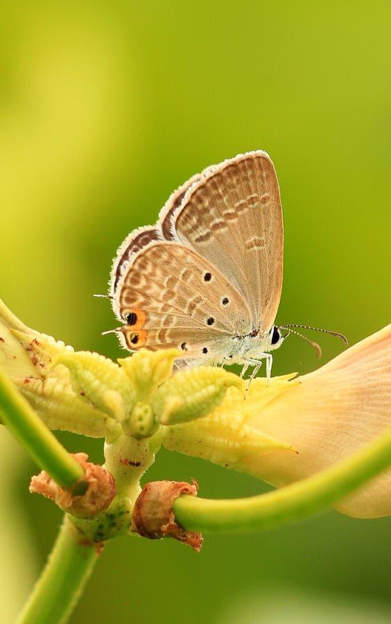 Farfalla della sorgente fotografie stock