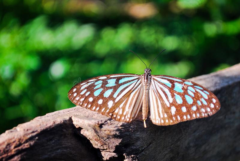 Farfalla di mattina immagine stock libera da diritti