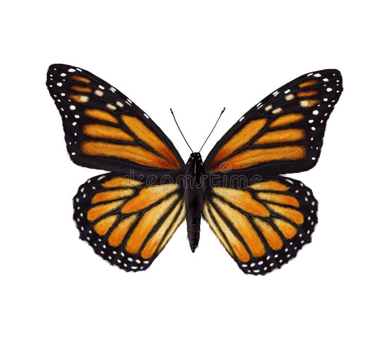 Farfalla di monarca royalty illustrazione gratis