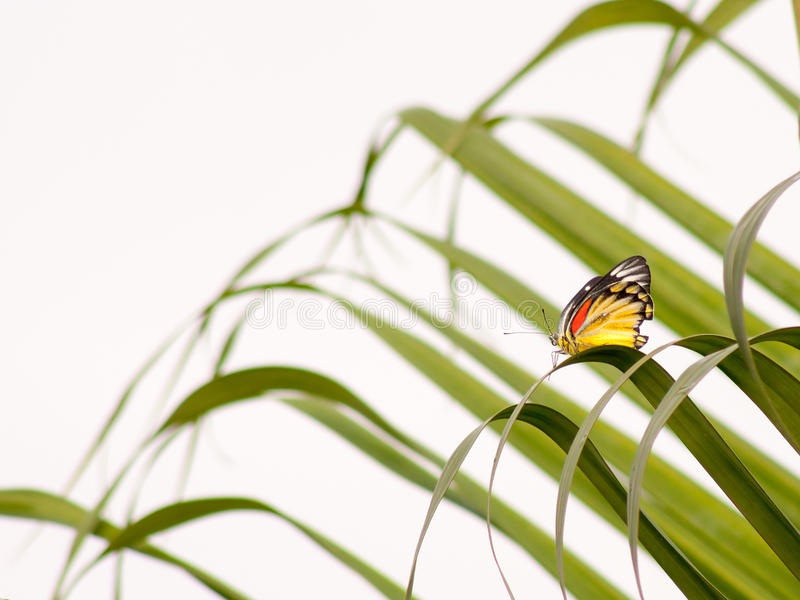 Farfalla di monarca africana fotografie stock libere da diritti