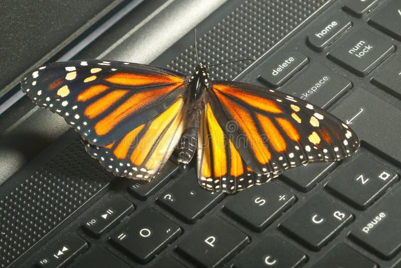 Farfalla di monarca sull'energia ecologica co della tastiera di computer immagine stock
