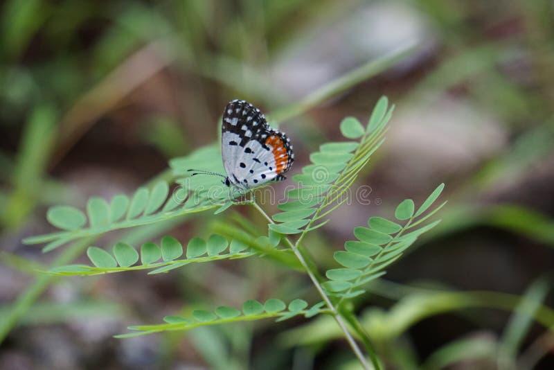 Farfalla di naturale fotografia stock