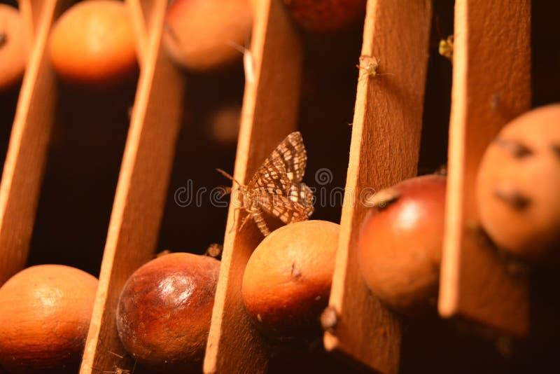 Farfalla di notte immagine stock libera da diritti