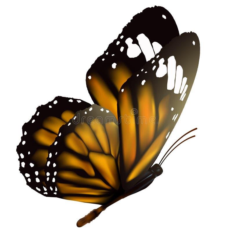 Farfalla di volo su fondo bianco royalty illustrazione gratis