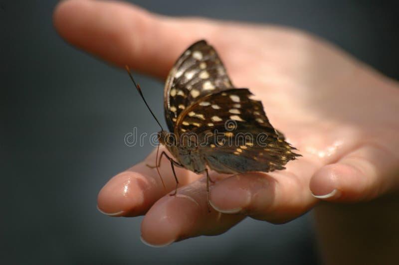 Farfalla a disposizione immagine stock libera da diritti