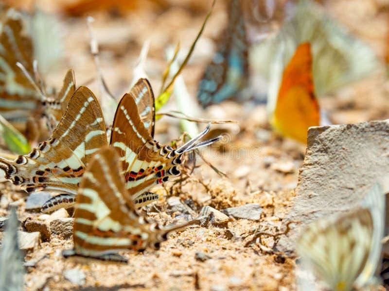 Farfalla dorata su terra Fondo di autunno con le foglie e le farfalle fotografia stock libera da diritti