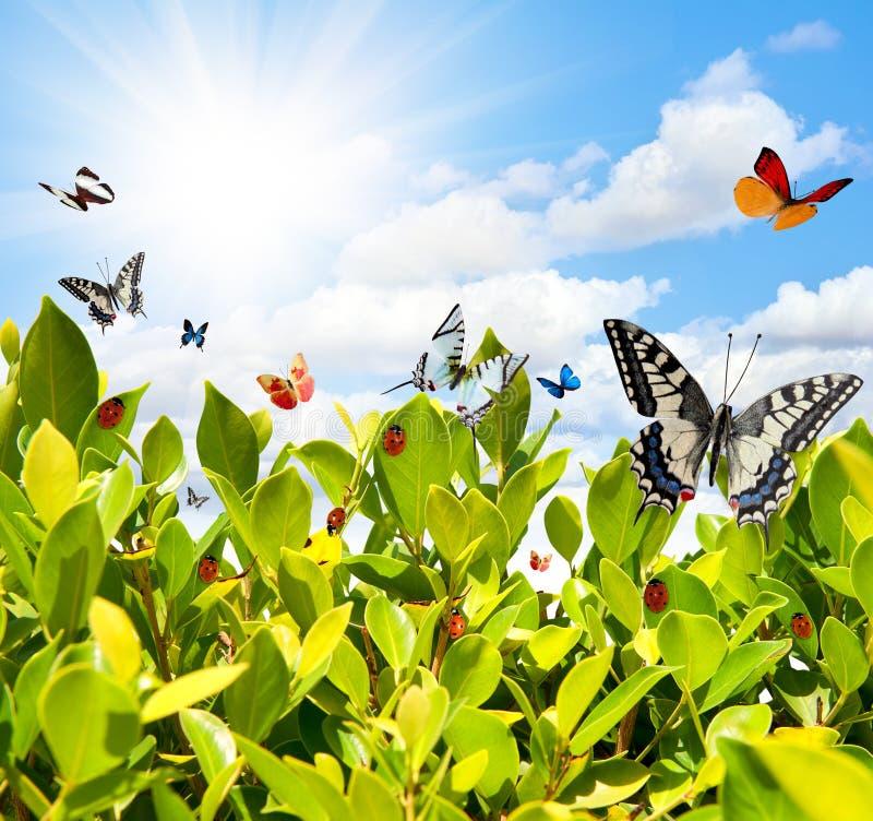 Farfalla e ladybug fotografia stock libera da diritti