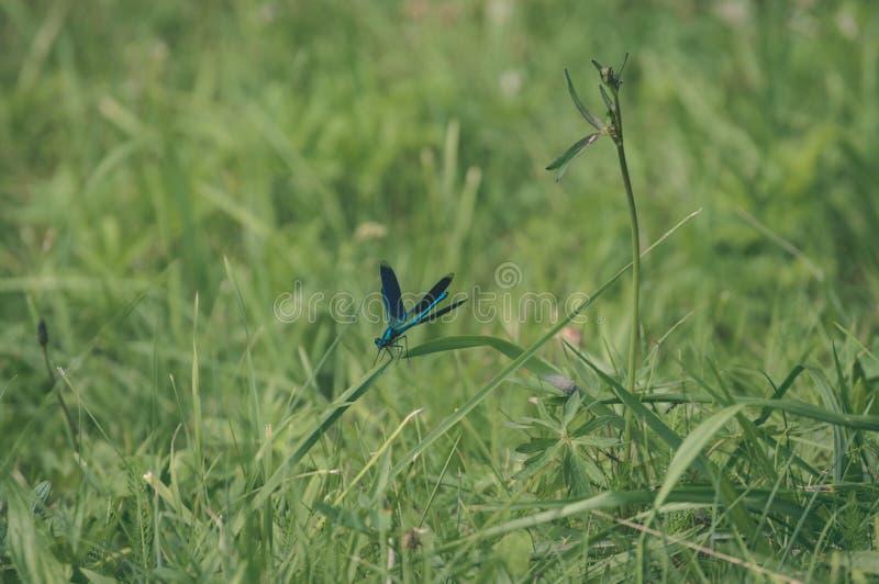 farfalla e libellula nella foresta di estate - sguardo d'annata del film fotografia stock