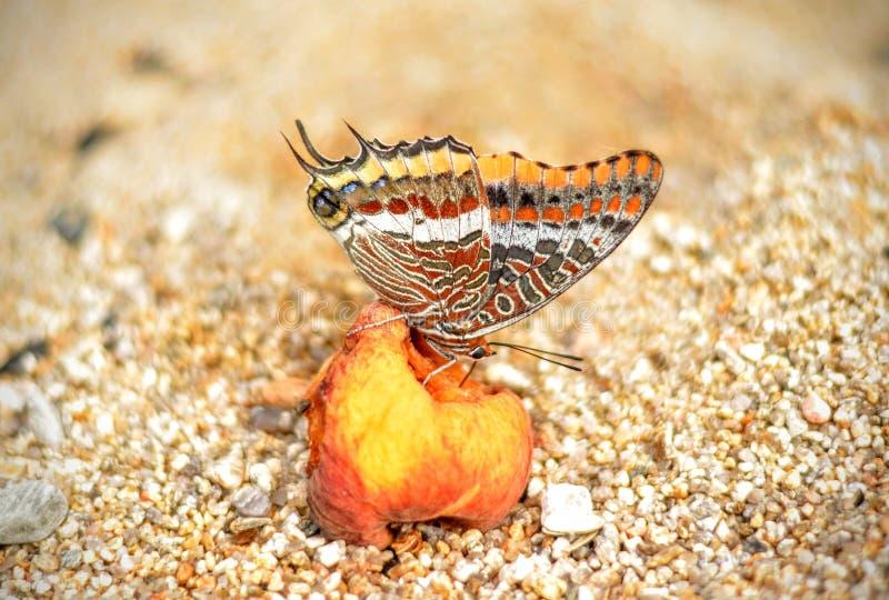 Farfalla e pesca fotografia stock libera da diritti