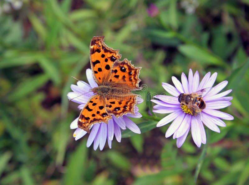 Farfalla ed ape fotografia stock