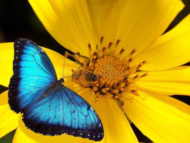 Farfalla ed ape sul fiore fotografie stock
