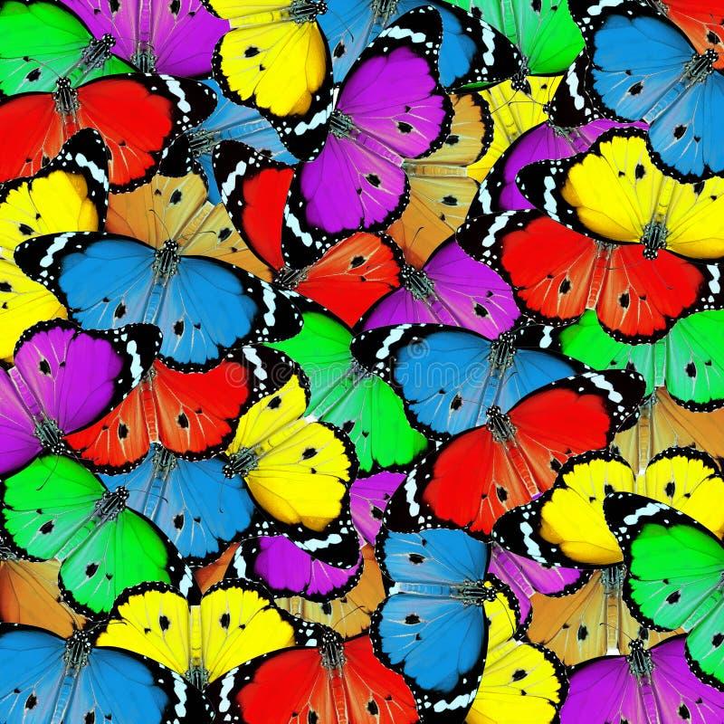 Farfalla esotica di colore fotografie stock libere da diritti