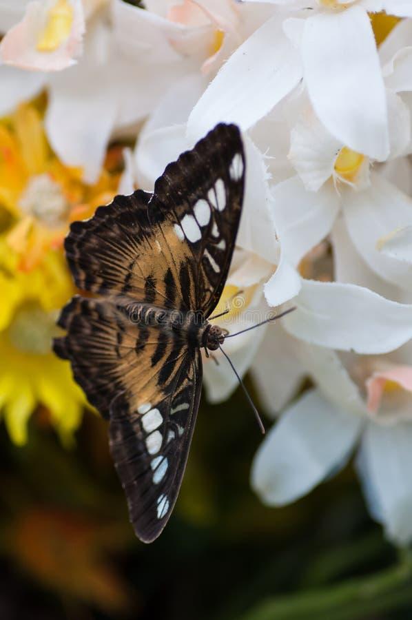 Farfalla esotica in un fiore di plastica immagini stock