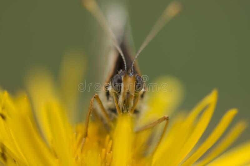 Farfalla in fiore fotografia stock