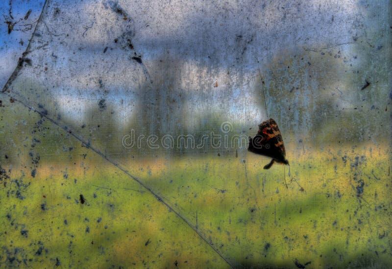 Farfalla guasto fotografie stock