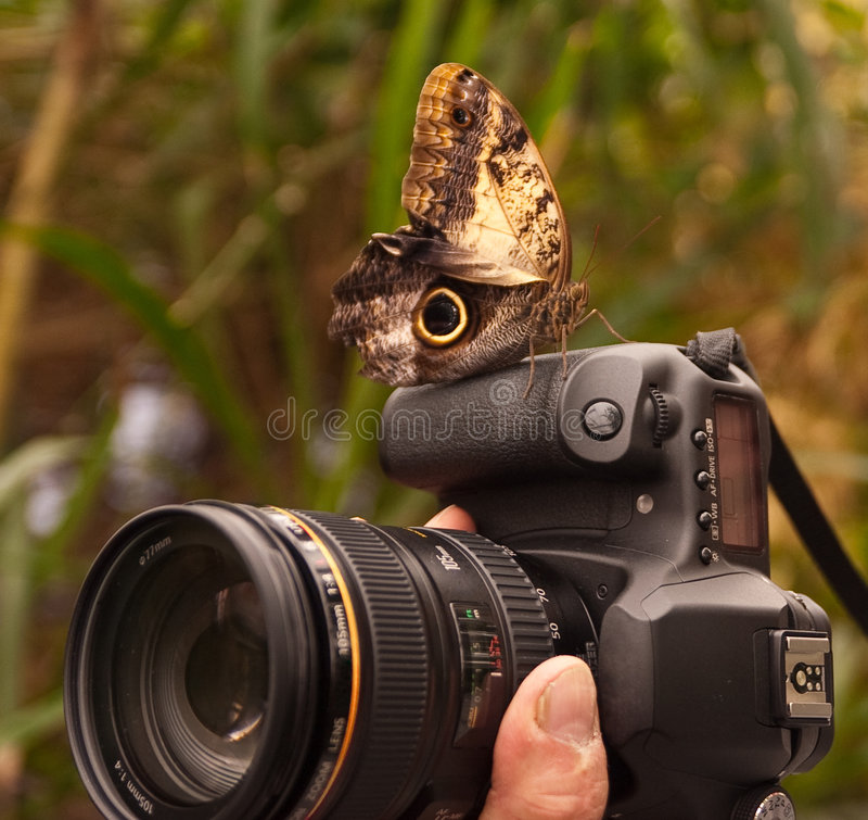 Farfalla insolente sulla macchina fotografica fotografie stock