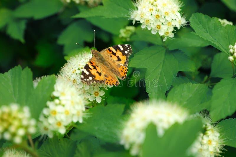 Farfalla luminosa sulla pianta tropicale con i bei fiori e fotografia stock