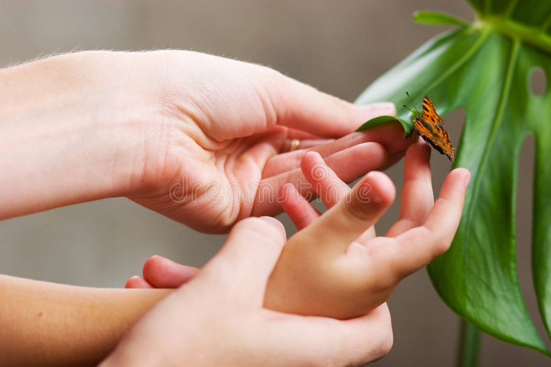 Farfalla in mani immagine stock