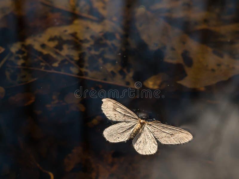 Farfalla morta fotografia stock