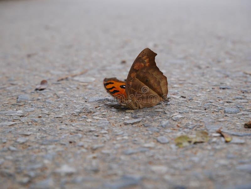 Farfalla morta sul pavimento immagini stock libere da diritti
