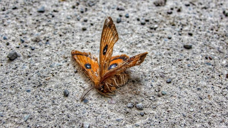 Farfalla morta sulla terra fotografia stock