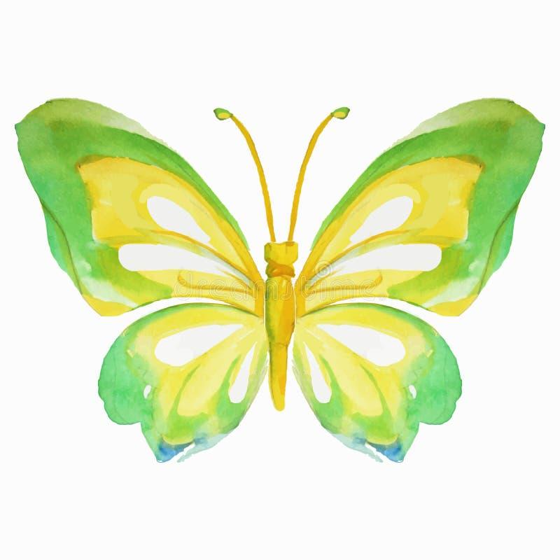 Farfalla multicolore dell'acquerello Illustrazione di vettore illustrazione vettoriale