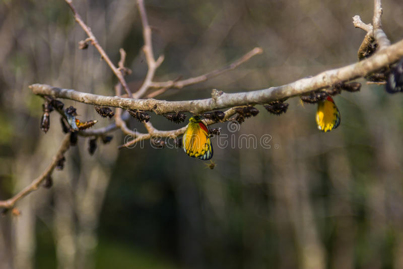 Farfalla in natura sull'albero fotografia stock libera da diritti