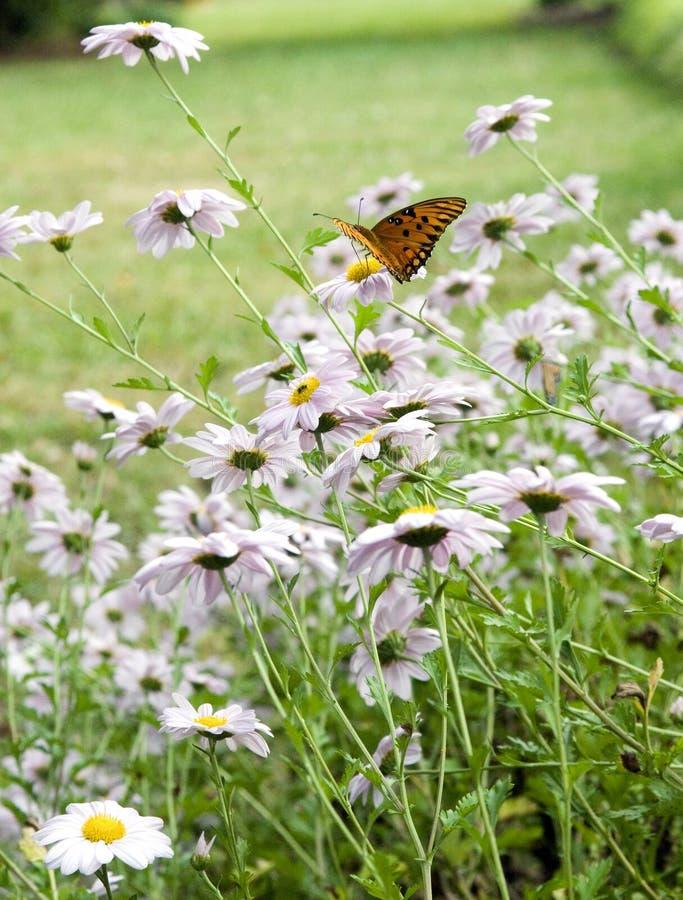 Farfalla nei fiori fotografie stock libere da diritti