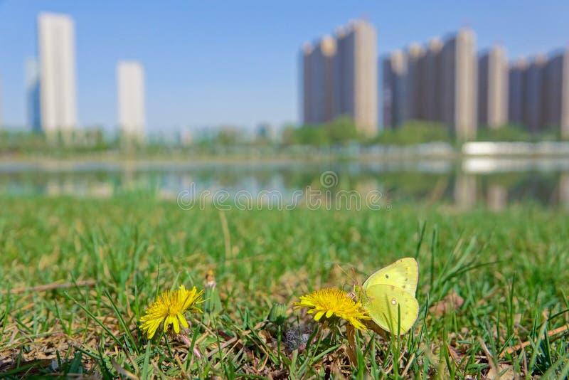 Farfalla nel parco della città immagini stock