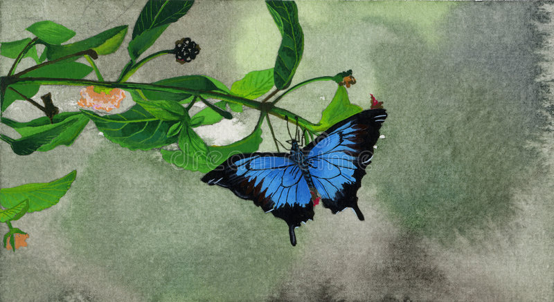 Farfalla nera e blu illustrazione vettoriale