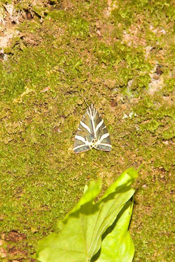 Farfalla Petaloudes di Rhodos Grecia fotografia stock libera da diritti