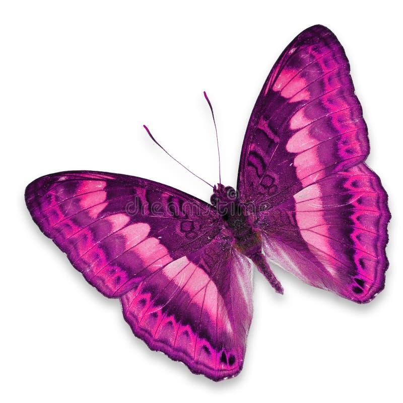 Farfalla rosa fotografia stock