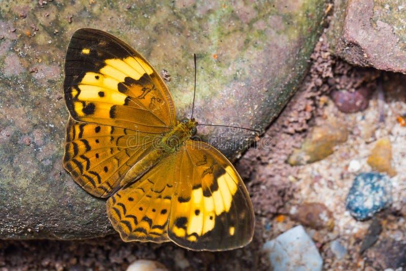 Farfalla rustica fotografia stock libera da diritti