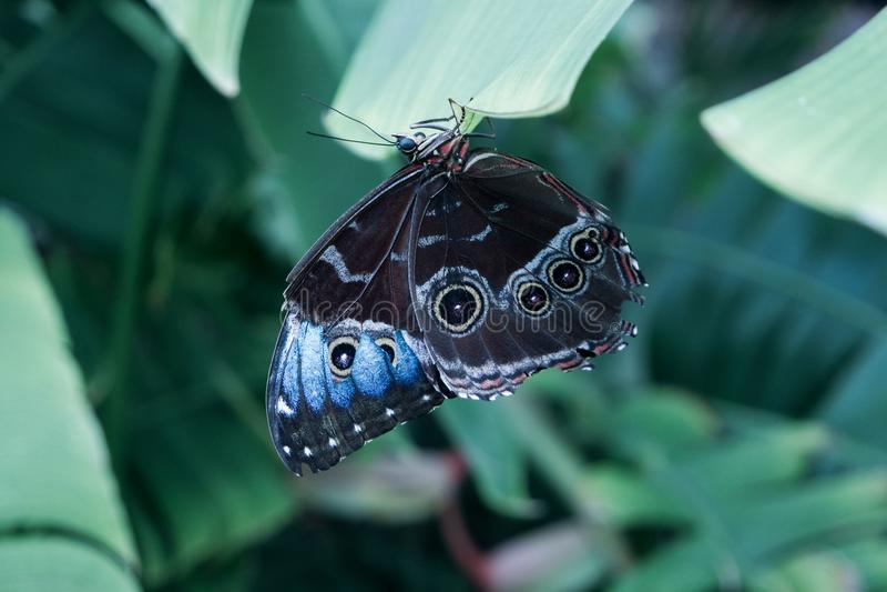Farfalla selvaggia in natura immagini stock libere da diritti